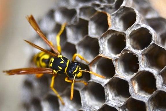 wasps_hero