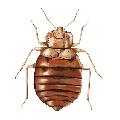bedbugs-1