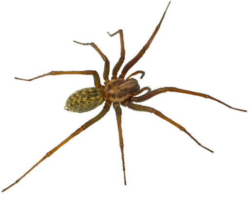 pest-library-spider